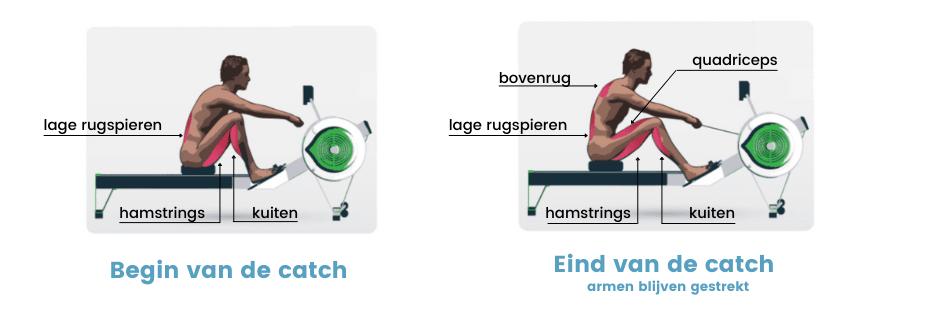 roeitrainer spieren - spiergebruik tijdens de catch