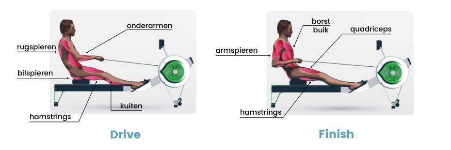 roeitrainer spieren - spiergebruik tijdens drive en finish